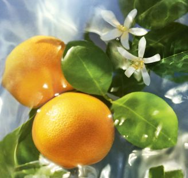 Eau de Toilette Aqua Allegoria Mandarine Basilic Guerlain